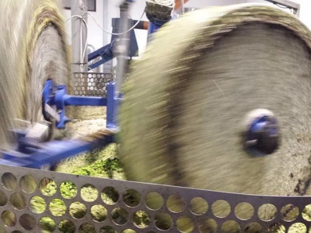 Frantumazione olive sotto macina di granito