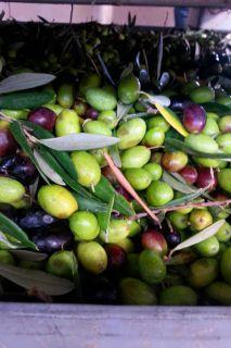 Olive prima della deramificazione