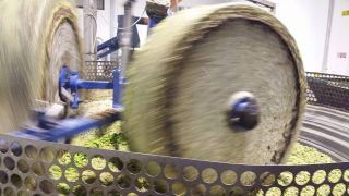 Olive frantumate sotto macina di granito
